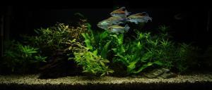 Jak přestěhovat akvárium