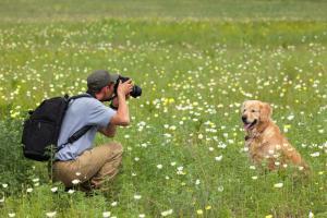 Jak fotit psy jako profesionál?