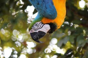 Papoušek jako oblíbený společník. Který je však vhodný?