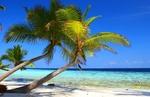 Ostrov Hamilton: nejlepší práce na světě