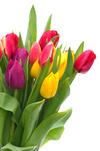 Valentýn - řekni to květinou!