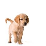Přírůstek do rodiny aneb Jak přivítat štěně