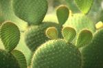Kaktusy na zahrádce?