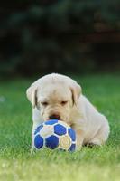 Marley a já: Ze života psa a jeho rodiny