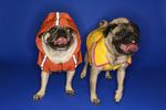 Oblečky pro psy – paráda nebo nutnost?