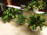 Jak v zimě pečovat o pokojové rostliny