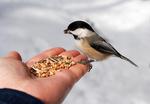 Prosinec na zahrádce aneb Krmíme ptáky
