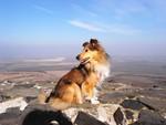 Jak vybrat psí cvičák. Jakými kritérii byste se měli řídit?
