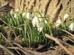 Březen na zahradě. Tipy a triky, aby vaše zahrada jen kvetla!