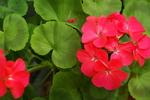 Květen na zahradě. Máj je lásky čas, milujte proto svou zahrádku a všechen život v ní!