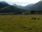 Nový Zéland. Cestování pohádkovou zemí pokračuje