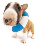 Potřeby pro psy a kočky aneb Dopřejte svým chlupatým mazlíčkům to nejlepší!