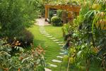 Zahrada v červenci. Cizokrajné rostliny na naší zahrádce?