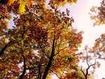 Dva podzimní čtenářské tipy. O figurách, které dávno leží vedle šachovnice