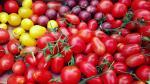 Jak vybrat správná hnojiva pro indoor pěstování
