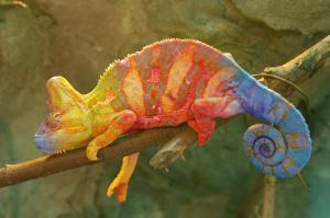 Jak si snadno a rychle postavit terárium pro chameleona